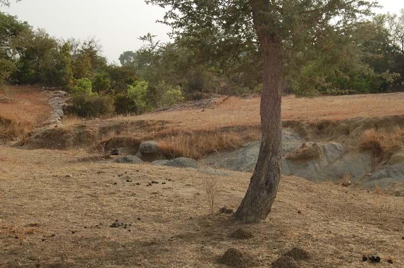 Bongo wooded stream segment downsream from sample point.JPG