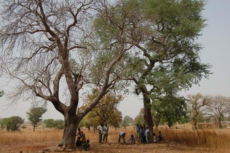 Bongo soil sample point between a Fadherbia & Lanea acida.JPG