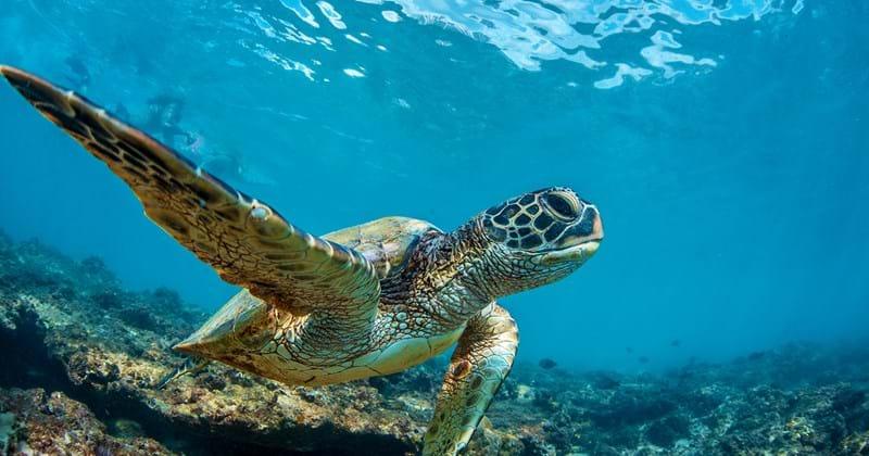 Sea turtle_1600x1000.jpg