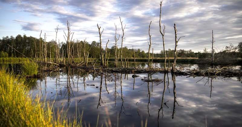 hydrogeology-and-ground-water-pexels-lake-trees-sky 1600x1000.jpg
